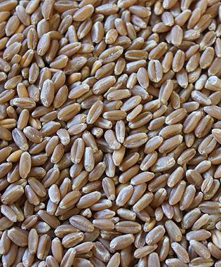 montana milling inc hard red winter wheat