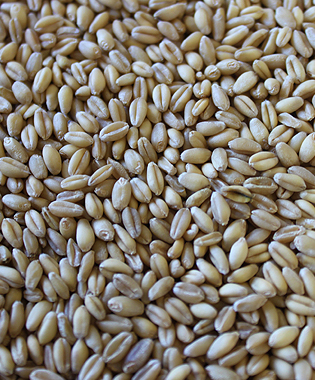 Soft white wheat uses