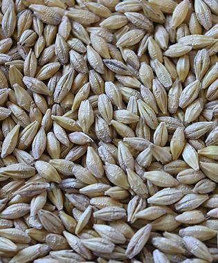montana milling inc whole barley